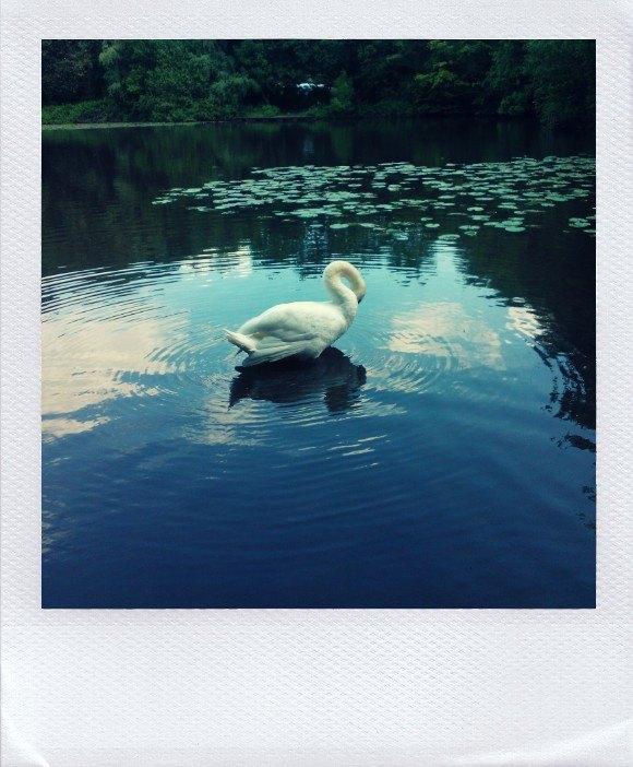 Le polaroid a le vent en poupe: du visuel pour votre image_WAW