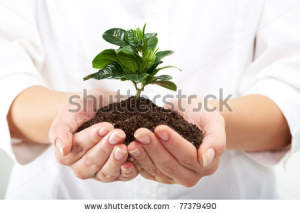 stock-photo-photo-of-human-hands-holding-little-sprout-with-care-77379490