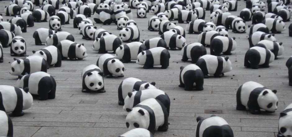 Earth Hour 2016- le WWF interpelle le Premier ministre belge