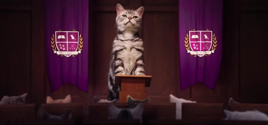 Les vidéos de chats ne servent pas qu'à procrastiner sur le web. Elles s'utilisent aussi à des fins commerciales. Mais qui résiste à ces petits chatons?