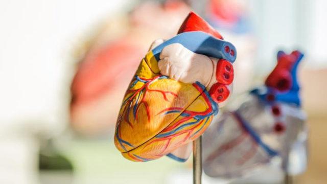 Données biométriques: Apple étudie nos battements de cœur...